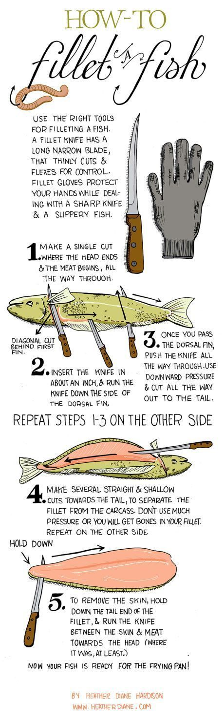 how to of the day fillet a fish common sense evaluation