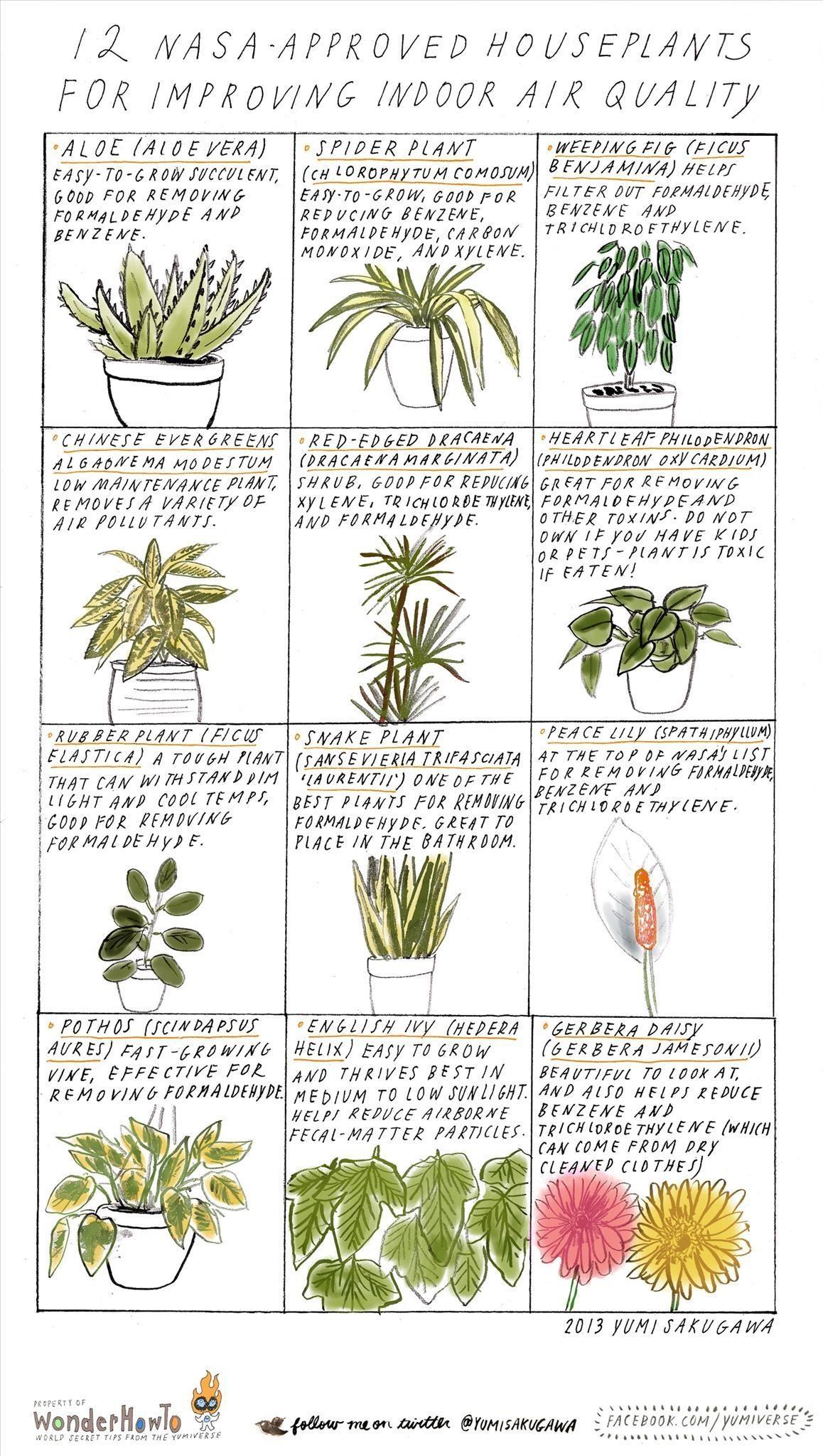 Plants Archives Common Sense Evaluation